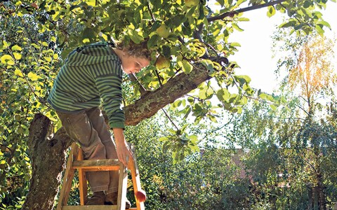 fruit tree pruning instructions