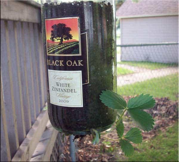 hanging wine bottle planter instructions