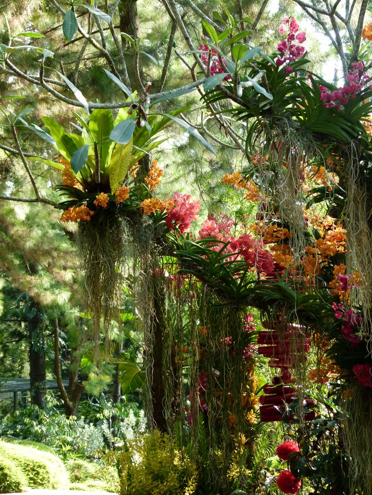 vanda orchid care instructions